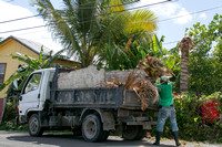 Loading palm leaves