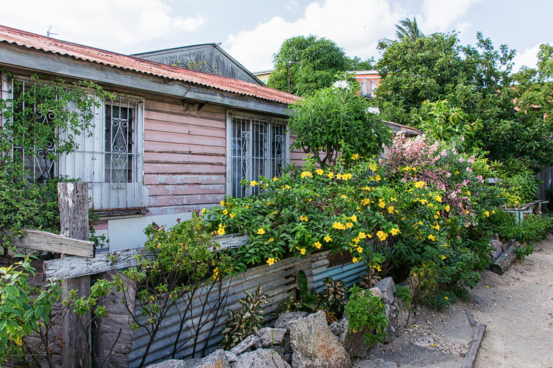 Colourful house and garden