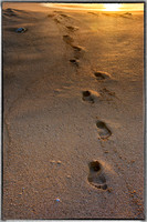 Footprints at the end of day