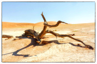 Branch at Dead Vlei, Namibia